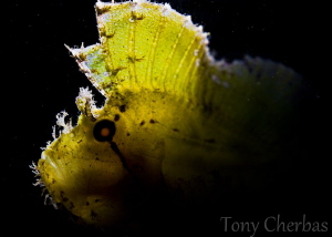 Leaf Light by Tony Cherbas